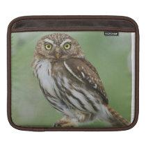Ferruginous Pygmy-Owl, Glaucidium brasilianum, 3 Sleeve For iPads