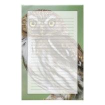 Ferruginous Pygmy-Owl, Glaucidium brasilianum, 3 Stationery