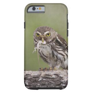 Ferruginous Pygmy-Owl, Glaucidium brasilianum, 5 Tough iPhone 6 Case