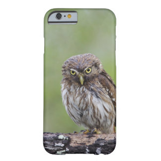 Ferruginous Pygmy-Owl, Glaucidium brasilianum, 6 Barely There iPhone 6 Case