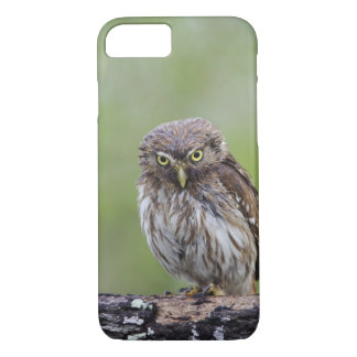 Ferruginous Pygmy-Owl, Glaucidium brasilianum, 6 iPhone 7 Case