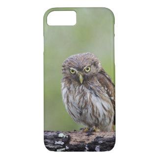 Ferruginous Pygmy-Owl, Glaucidium brasilianum, 6 iPhone 7 Case