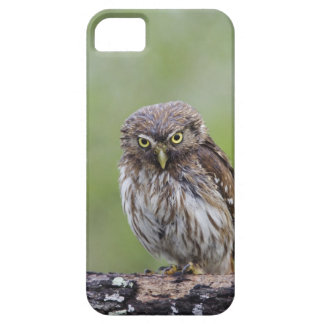 Ferruginous Pygmy-Owl, Glaucidium brasilianum, 6 iPhone SE/5/5s Case