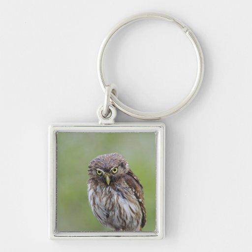 Ferruginous Pygmy-Owl, Glaucidium brasilianum, 6 Keychain