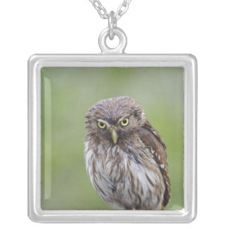 Ferruginous Pygmy-Owl, Glaucidium brasilianum, 6 Silver Plated Necklace