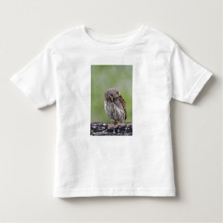 Ferruginous Pygmy-Owl, Glaucidium brasilianum, 6 Toddler T-shirt