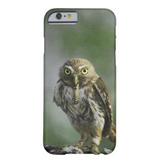 Ferruginous Pygmy-Owl, Glaucidium brasilianum, 7 Barely There iPhone 6 Case