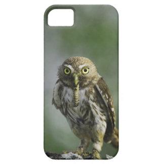Ferruginous Pygmy-Owl, Glaucidium brasilianum, 7 iPhone 5 Cases