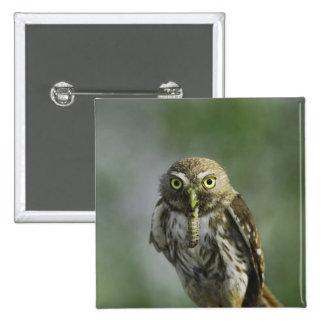 Ferruginous Pygmy-Owl, Glaucidium brasilianum, 7 Pinback Button