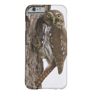Ferruginous Pygmy-Owl, Glaucidium brasilianum, 8 Barely There iPhone 6 Case