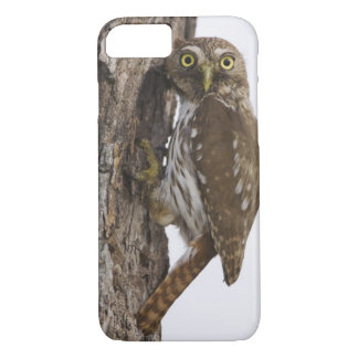 Ferruginous Pygmy-Owl, Glaucidium brasilianum, 8 iPhone 7 Case