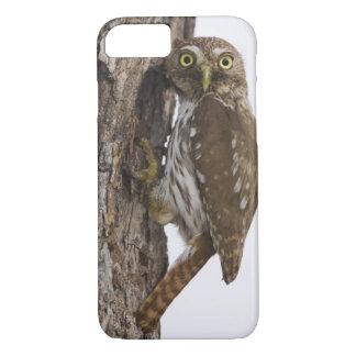 Ferruginous Pygmy-Owl, Glaucidium brasilianum, 8 iPhone 7 Case