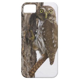 Ferruginous Pygmy-Owl, Glaucidium brasilianum, 8 iPhone SE/5/5s Case