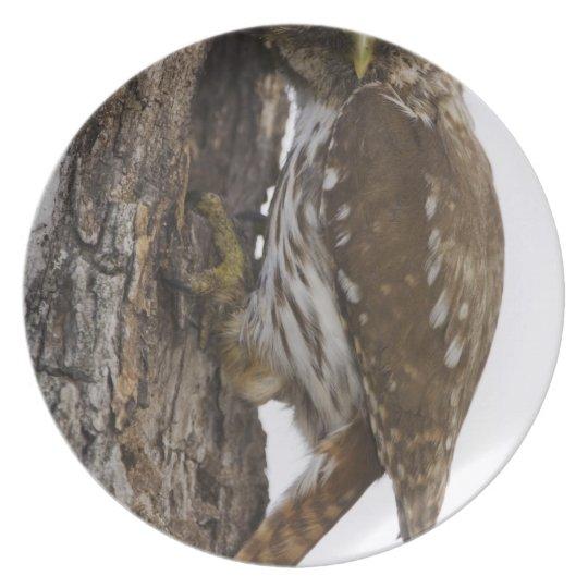 Ferruginous Pygmy-Owl, Glaucidium brasilianum, 8 Melamine Plate