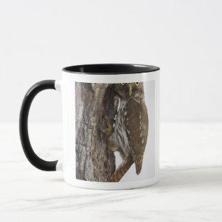 Ferruginous Pygmy-Owl, Glaucidium brasilianum, 8 Mug