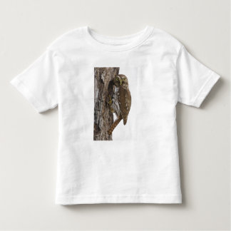 Ferruginous Pygmy-Owl, Glaucidium brasilianum, 8 Toddler T-shirt