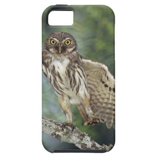 Ferruginous Pygmy-Owl, Glaucidium brasilianum, iPhone SE/5/5s Case