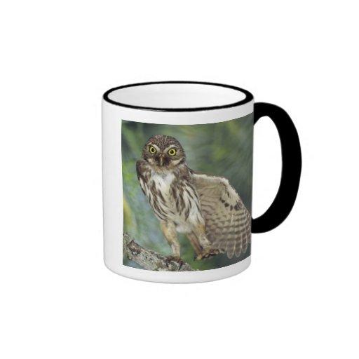 Ferruginous Pygmy-Owl, Glaucidium brasilianum, Ringer Coffee Mug