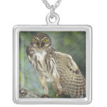 Ferruginous Pygmy-Owl, Glaucidium brasilianum, Silver Plated Necklace