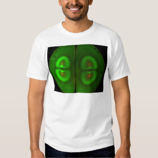 Fertilized frog egg t shirt