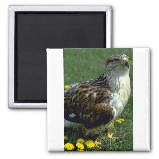 Feruginous Hawk 2 Inch Square Magnet