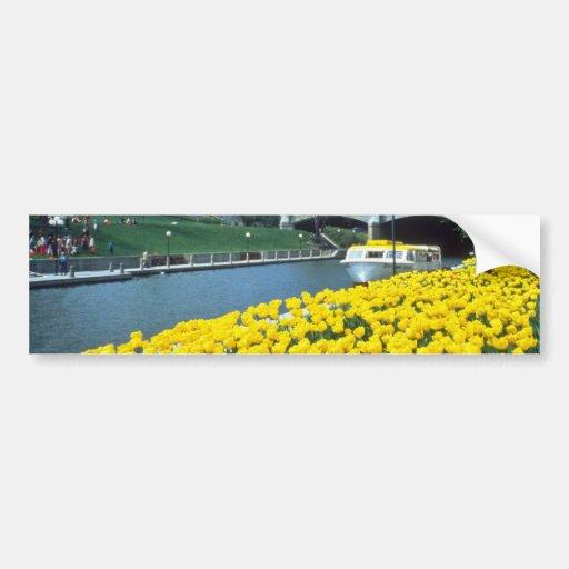 festival canadiense amarillo del tulipán, canal de pegatina para auto