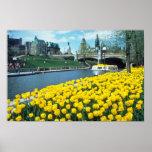 festival canadiense amarillo del tulipán, canal de póster
