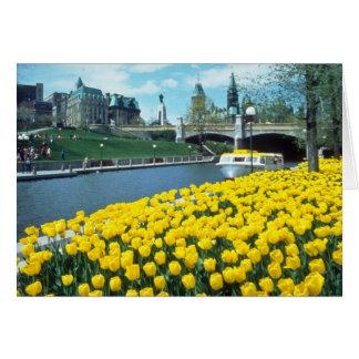 festival canadiense amarillo del tulipán, canal de tarjetón