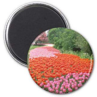 Festival canadiense rojo del tulipán, granja exper imán redondo 5 cm