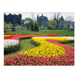 Festival canadiense rojo del tulipán, parque impor postal