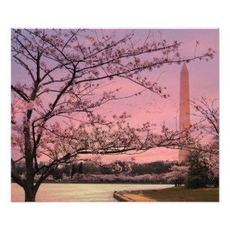 Festival de la flor de cerezo del monumento de cojinete