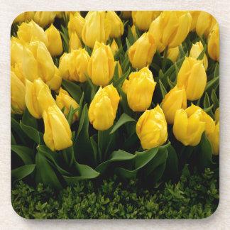 Festival del tulipán - práctico de costa de 27 posavasos de bebidas
