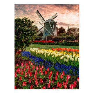 Festival del tulipán postal
