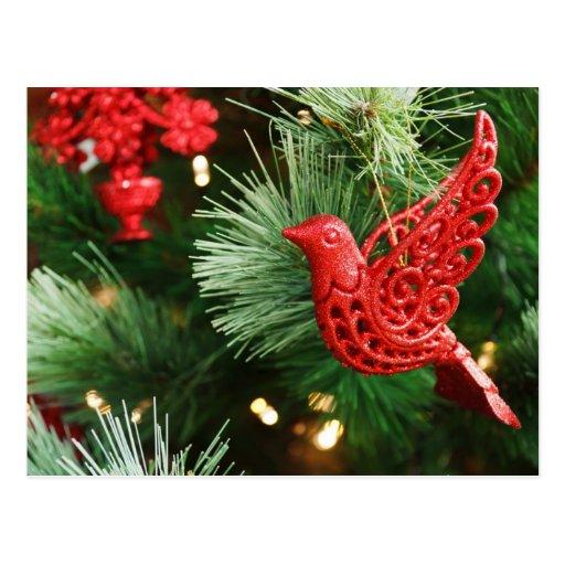 Festive Red Bird Christmas Postcard