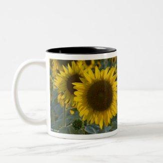 Festive Sunflower Two-Tone Coffee Mug