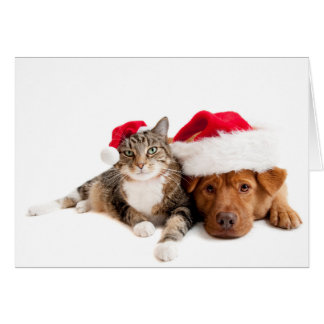 Festive Tabby Cat and Lab Dog Holiday Card