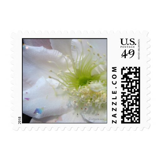 Festive White Cactus Flower Custom Wedding Postage Stamps