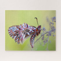 Festoon Butterfly. Jigsaw Puzzle