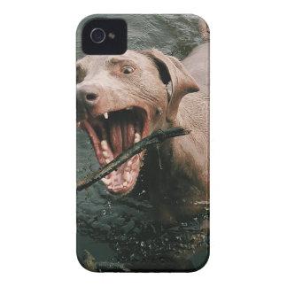 Fetching Weimaraner Case-Mate iPhone 4 Case