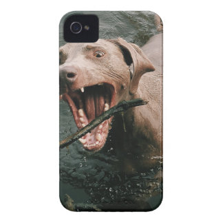 Fetching Weimaraner iPhone 4 Case-Mate Cases
