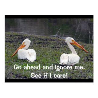Feuding Pelicans Postcard