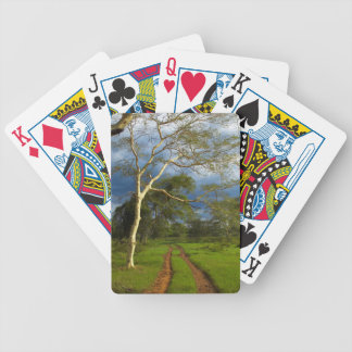 Fever Tree (Acacia Xanthophloea) By Dirt Track Bicycle Playing Cards