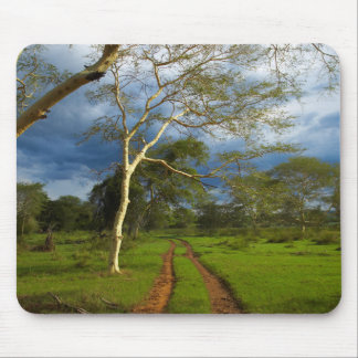 Fever Tree (Acacia Xanthophloea) By Dirt Track Mouse Pad