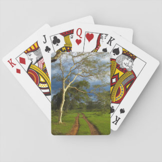 Fever Tree (Acacia Xanthophloea) By Dirt Track Playing Cards