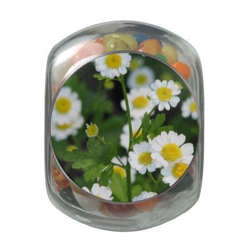 Feverfew Glass Candy Jars