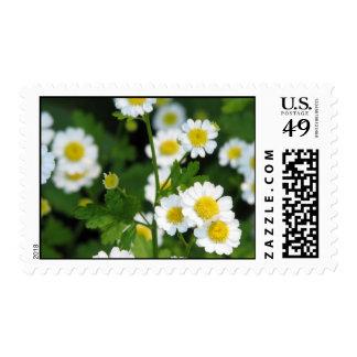 Feverfew Stamp