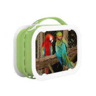 Fiambrera colorida de los Macaws de los loros