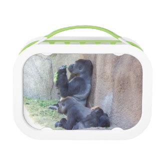 Fiambrera de la familia del gorila