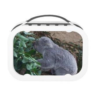Fiambrera de la koala