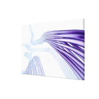Fibras de nervio estilizadas impresiones en lienzo estiradas